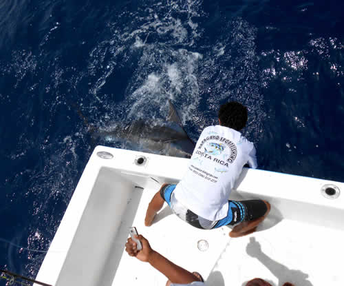 Marlin fishing in Papagayo